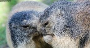 Comune di Introd: Parc Animalier, ma nonsolo